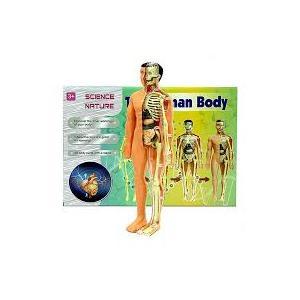 İnsan Anatomisi Vücudu 3D Eğitim Seti